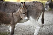 foto of deer family  - Portrait of a donkey family in the deer park - JPG