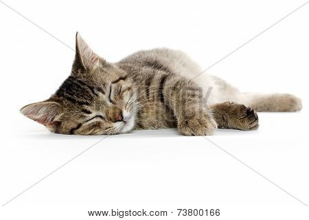 Cute Tabby Cat