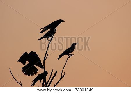 Birds warming up at dawn on a leafless tree