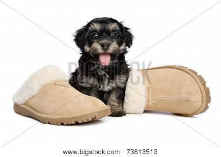 Cute Happy Havanese Puppy Dog Is Sitting Next To Slippers