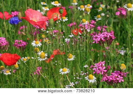 Flowers On Meadow
