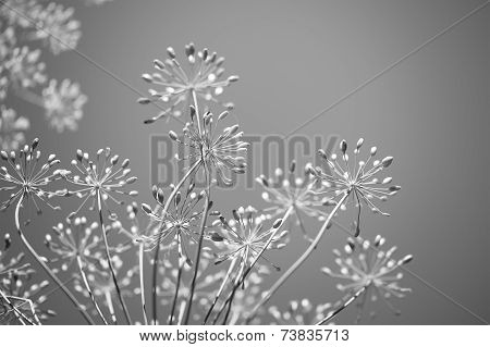 Spring Floral Background Monochrome