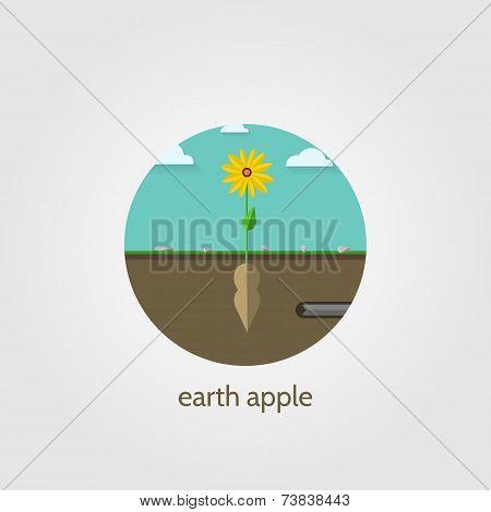 Flat vector icon for Jerusalem artichoke