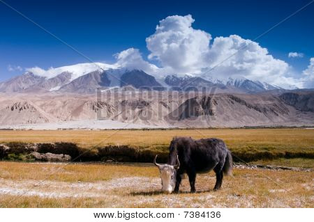 The fall of the Pamirs in Xinjiang and yak pastures