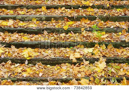 Old Stair In The Park, Strewn With Yellow Leaves