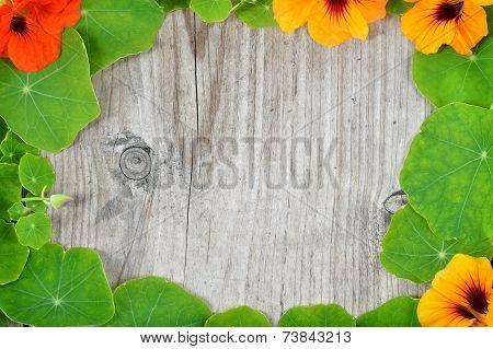 Border Decoration Of Nasturtium Leaves And Flowers.