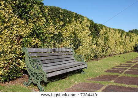 Wooden Bench In Front Of Hedge