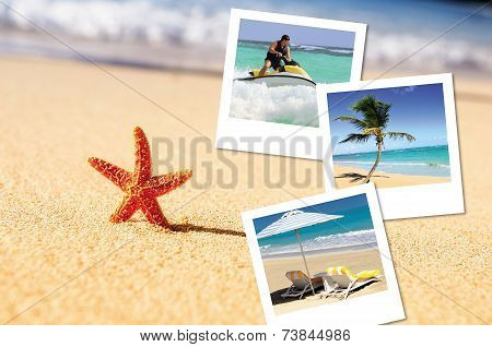 Sea Starfish And Pics