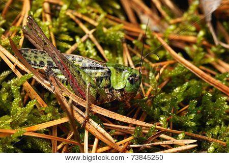 grasshopper in a forest