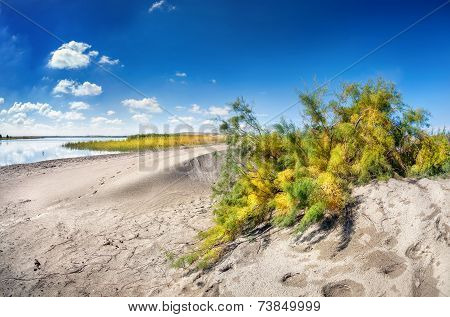 Dune Near The Lake