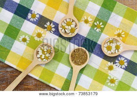 Fresh chamomile flowers and dried chamomile flowers on wooden spoons on checkered cloth