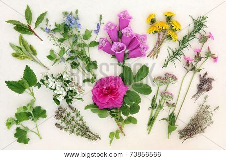 Herb and flower selection used in herbal and naturopathic medicine over mottled cream background.