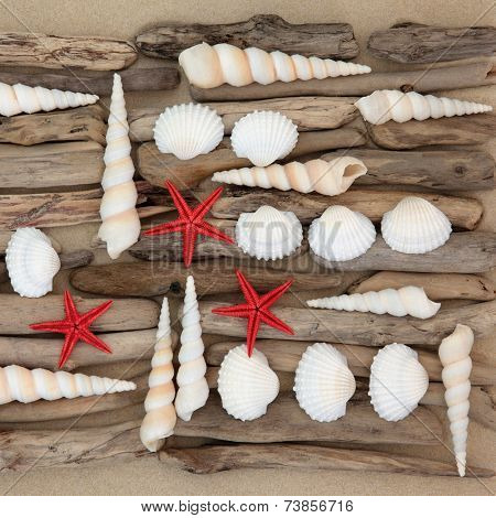 Seashell and driftwood abstract collage on beach sand background.