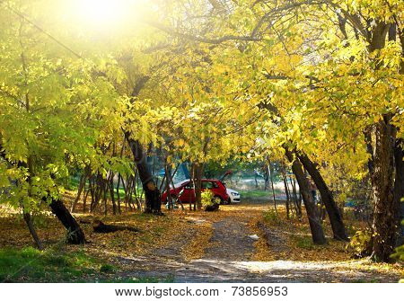 Autumn sunny day in the park