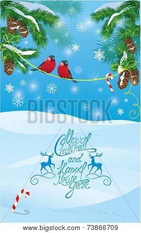 Card With Fir Tree Branches And Bullfinch Birds On Light Blue Sky Background. Handwritten Text Chris
