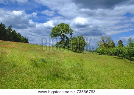 Meadow with fruit trees at the edge of the woods