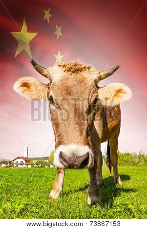 Cow With Flag On Background Series - People's Republic Of China