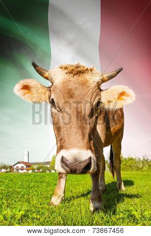 Cow With Flag On Background Series - Italy