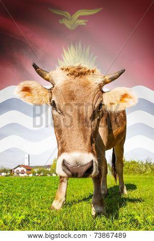 Cow With Flag On Background Series - Kiribati