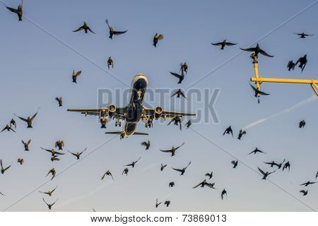Aircraft and Bird Strikes