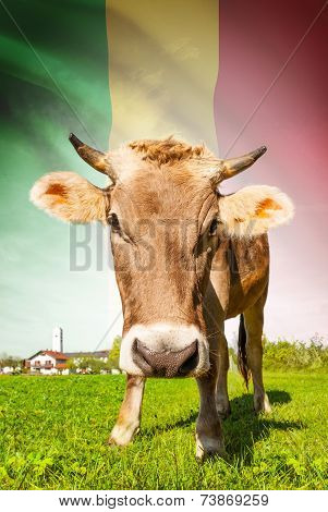 Cow With Flag On Background Series - Mali