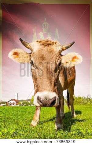 Cow With Flag On Background Series - Montenegro