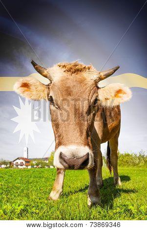 Cow With Flag On Background Series - Nauru