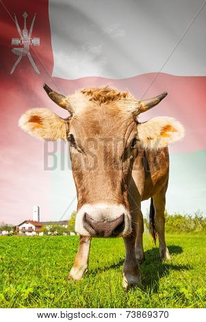 Cow With Flag On Background Series - Oman