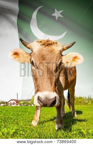Cow With Flag On Background Series - Pakistan