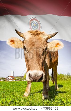 Cow With Flag On Background Series - Paraguay