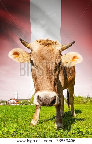Cow With Flag On Background Series - Peru