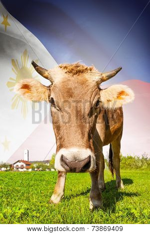 Cow With Flag On Background Series - Philippines