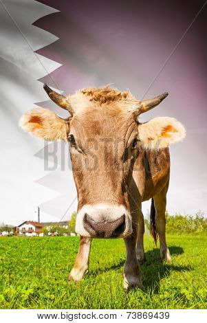 Cow With Flag On Background Series - Qatar