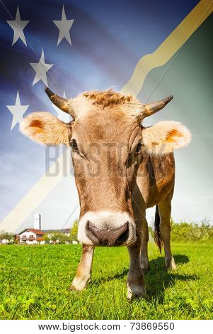 Cow With Flag On Background Series - Solomon Islands