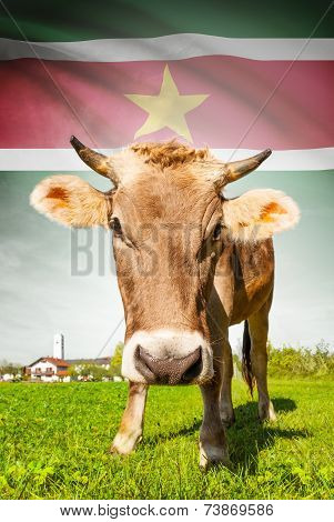 Cow With Flag On Background Series - Surinam