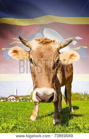 Cow With Flag On Background Series - Swaziland