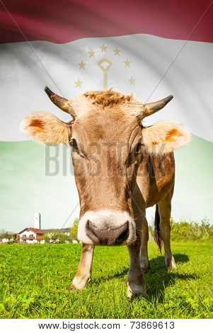 Cow With Flag On Background Series - Tajikistan