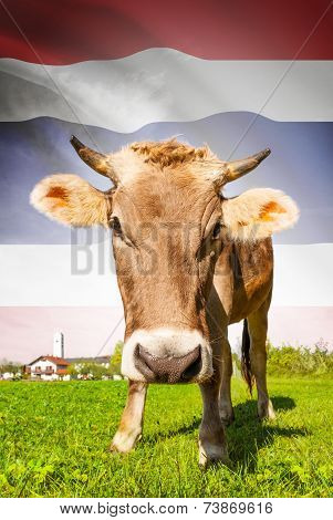 Cow With Flag On Background Series - Thailand