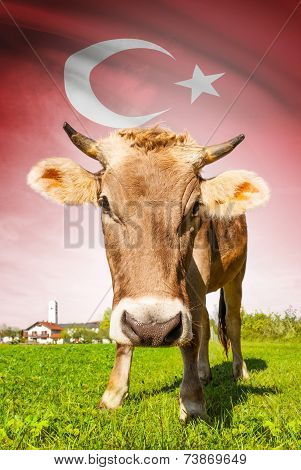 Cow With Flag On Background Series - Turkey
