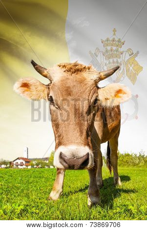 Cow With Flag On Background Series - Vatican City State