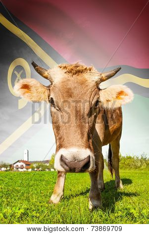 Cow With Flag On Background Series - Vanuatu