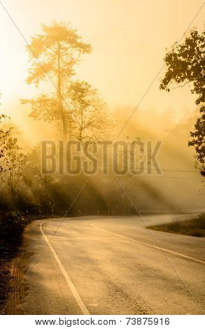 Silhouette Tree And Road With Sunbeam