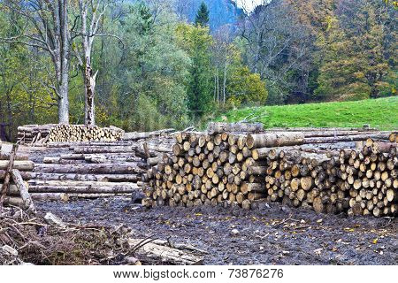 Timber yard in a forest