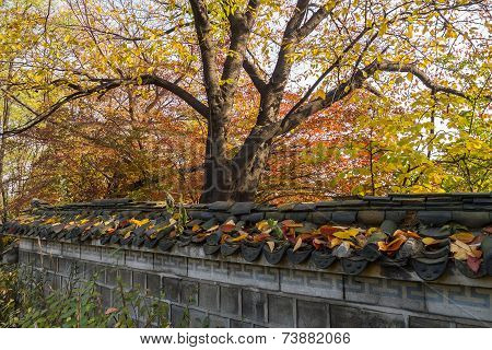 Trees and wall in autumn