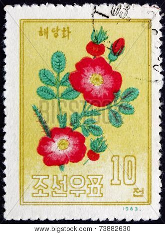 Postage Stamp North Korea 1963 Campion, Flowering Plant