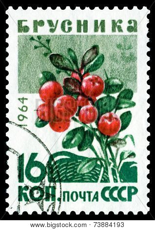 Vintage  Postage Stamp. Berry ?owberry.