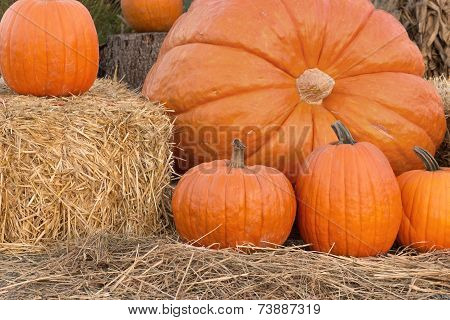 Pumpkin Family Portrait