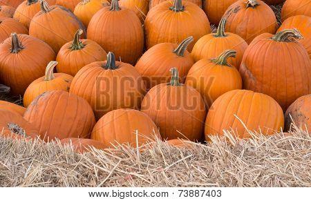 Pumpkin Sharp Background