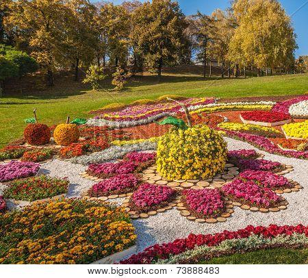 Kiev, Ukraine - October11: Chrysanthemumsr Show Landscape Park In Kiev