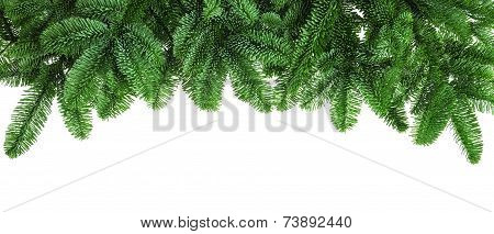 Lush Fir Twigs On White